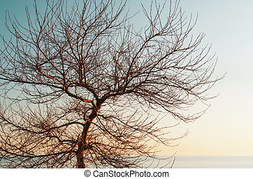 Branches without leaves of a graceful tree against the background of a blue sunset sky.