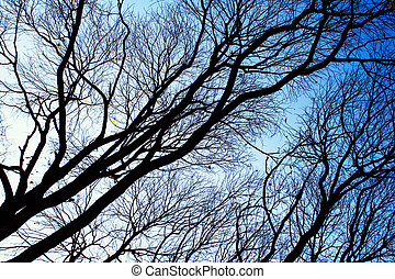 Tree branches against the sky in the winter.