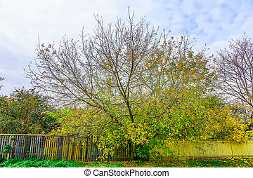 Branchy Colorful Tree with Fence in Autumn