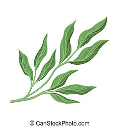Branchy stem with leaves. Vector illustration on a white ...