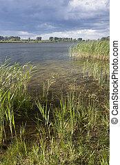 Brandenburg, Teich,  linum