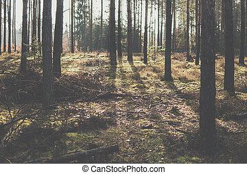 branqueado, floresta, paisagem