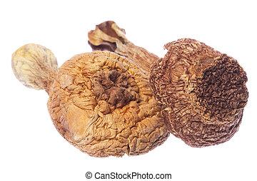 Brasil Morel Mushrooms Isolated - Isolated image of Brasil ...