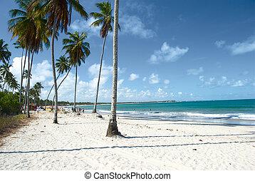 brasil, praia, tropicais