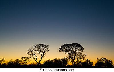 brasilianisch, sonnenuntergang, pantanal, bäume, ipe