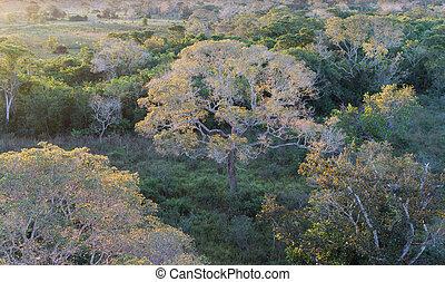 brasilianisch, sonnenuntergang, wald, pantanal