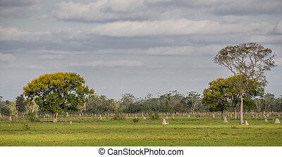 brasilien, pantanal, nester, termite
