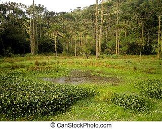 brasilien, sumpf, pantanal