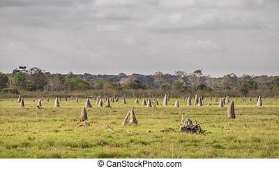 brasilien, vordergrund, pantanal, termite, fokus, nester