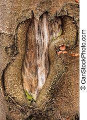 brauner, baumstamm, von, altes , bäume, in, der, wald