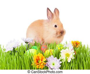 brauner, gras, Eier, grün, kanninchen,  baby, blumen, Ostern