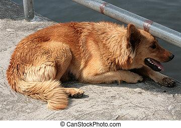 brauner hund, neben, a, see