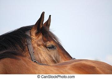 braunes pferd, auf, hinten, andere, schließen