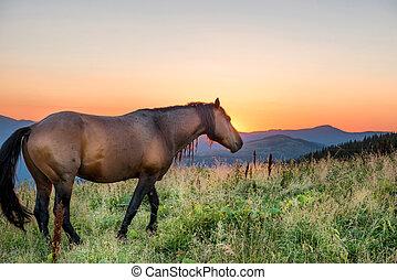braunes pferd, weiden, feld
