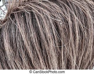 braunes pferd, winter, flaumig, haar, tier, nasse, fur.