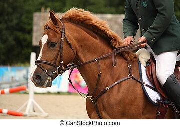 braunes pferd, zaum, porträt
