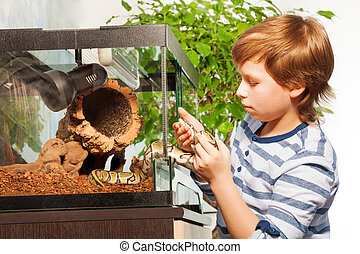 Brave boy gets Royal python out of terrarium