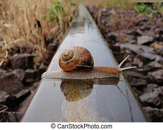 Brave snail - A snail crossing the railway line