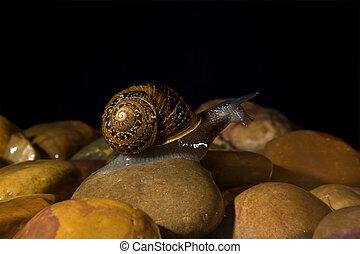 Brave snail