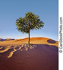 brave tree standing alone in the desert