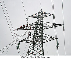 brave workers at work on trellis tension for maintenance of ...