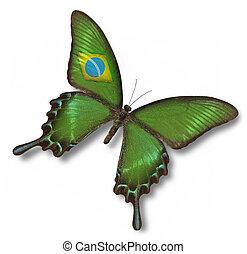 brazil läßt, auf, papillon