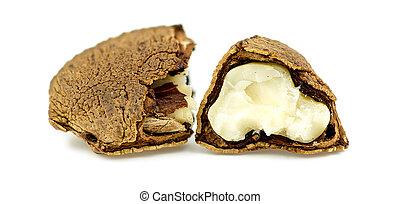 Brazil nut cracked in half