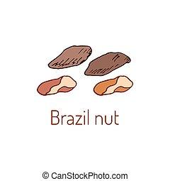 Brazil nuts Hand drawn