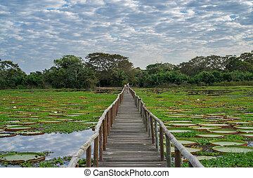 braziliaans, panantal, skyline, en, houten footbridge