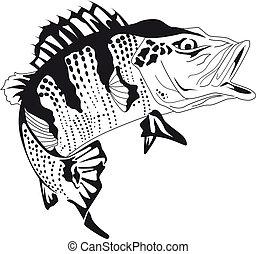 Brazilian fish tucunar
