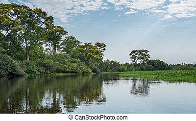 Brazilian Panantal and river - Cloudy day in Brazilian...