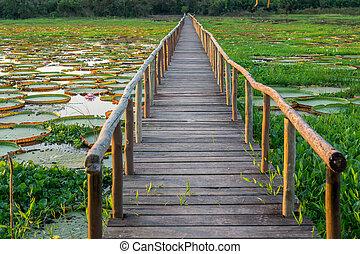 Brazilian Panantal, Victoria Regia plant and wooden...