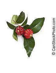 Brazilian Pitanga - Tropical fruit also called Pitanga,...