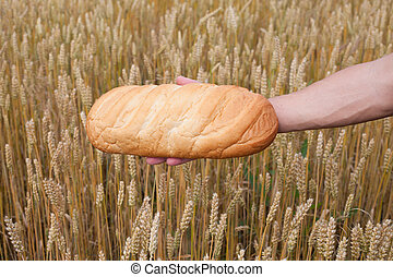 Bread and wheat.