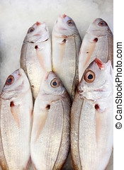 Bream - Group of bream fish on the fish market