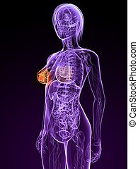 breast cancer - 3d rendered illustration of a female anatomy...