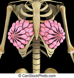 Breast glands - The breasts are a pair of milk-producing...