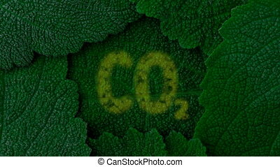 Breath of dark green leaves. Absorption of CO2, release of...