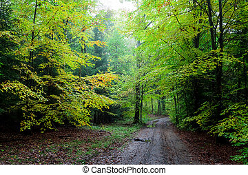 Breathtaking green path in the forest, Poland