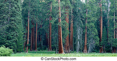 Breathtaking view of the California Redwoods