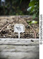 breed, geplante, bonen, tuin, achterplaats