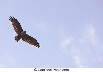 breed, propageren, vleugels