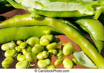 breed, shelling, beans.