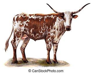 breeding cow. grazing cattle. animal husbandry. livestock. illustration on a white background