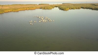 Breeding grounds of pelicans in Tuzly Estuary National ...