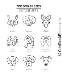 breeds., grobdarstellung, haustier, collection., oberer hund, abbildung, vektor