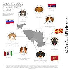 breeds:, país, montenegrin, slovenian., perro, bosnio, ...