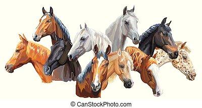 breeds3, conjunto, caballos