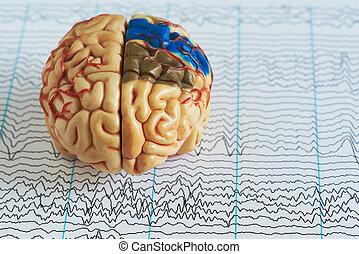 brein model, op, menselijke hersenen, golf, achtergrond