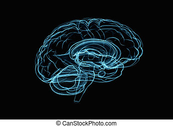 brein model